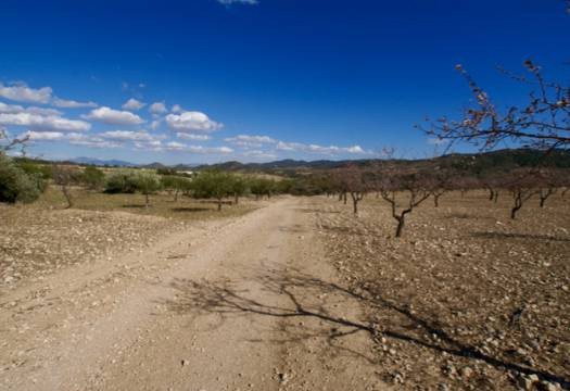 For sale: Land in Murcia City